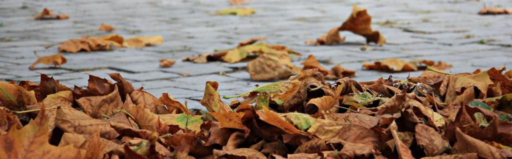 keep leaves of your yard and landscaping